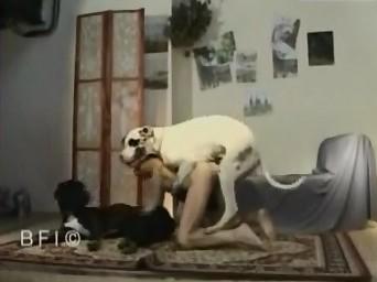 Увлекательная зоо групповуха с двумя псинами в квартире